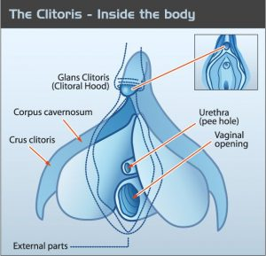 Clitoris Illustration