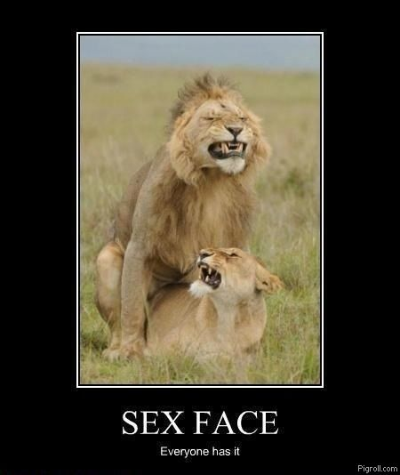 funny sex face demotivational lions fucking