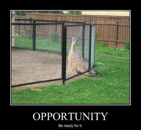 funny sex demotivational llama getting fucked with head caught under fence