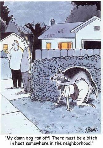 funny sex cartoon